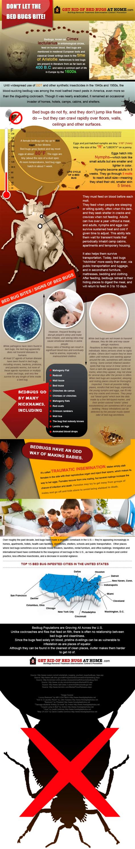 how to fight bed bugs fighting bed bugs infographics mania