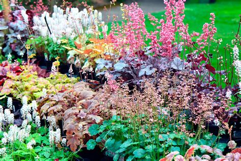 visit  kew gardens  afternoon tea   botanical