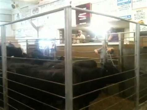Keosauqua Sale Barn cattle sale at keosauqua sale barn 1