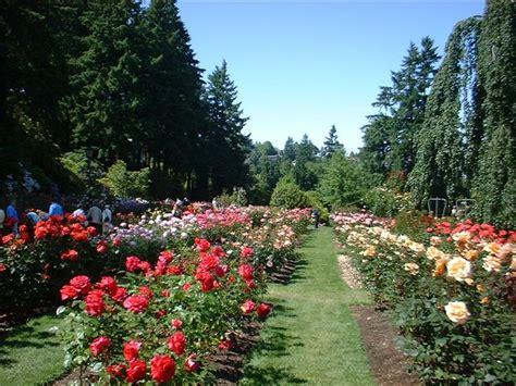 Bibit Bunga Tulip tanaman bunga tulip tanamanbunga