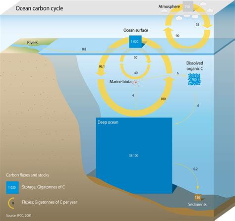 what is a carbon sink carbon sink quot a or artificial reservoir that
