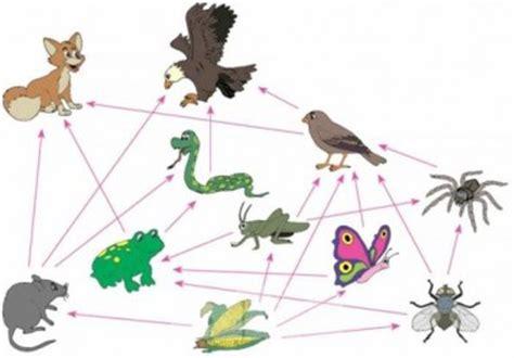 cadenas troficas que son definici 243 n de red tr 243 fica qu 233 es y concepto