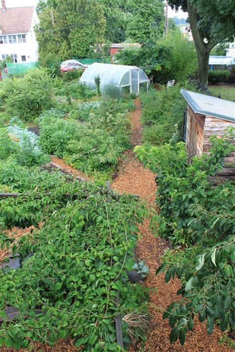 backyard permaculture australia best 25 permaculture garden ideas on pinterest