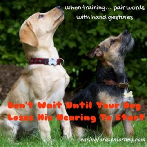 hearing loss in dogs 13 helpful tips on how to care for a senior caring for a senior