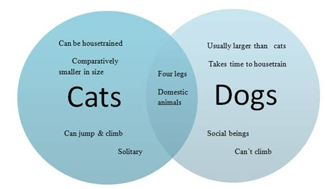 Compare And Contrast Cats And Dogs Essay by Compare Contrast Dogs Cats Essay
