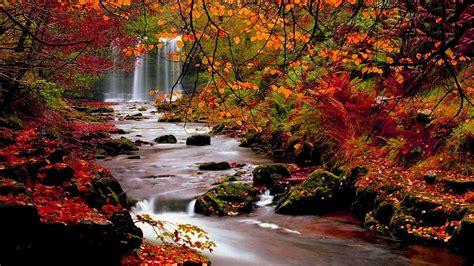 Rote Blätter Baum 4770 by Die 78 Besten Herbstwald Hintergrundbilder