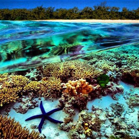 dive places 1093 best scuba diving images on diving