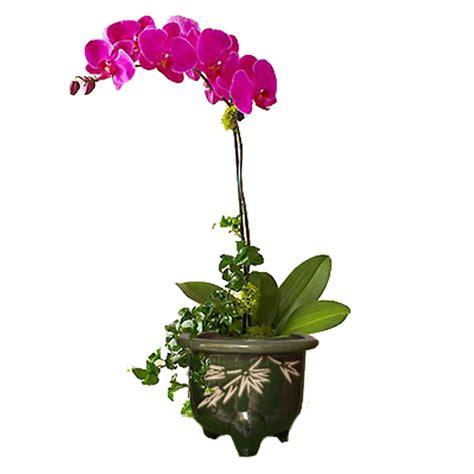 wallpaper anggrek biru wp 1464074022792 jpeg clipart bunga tulip clipartfest