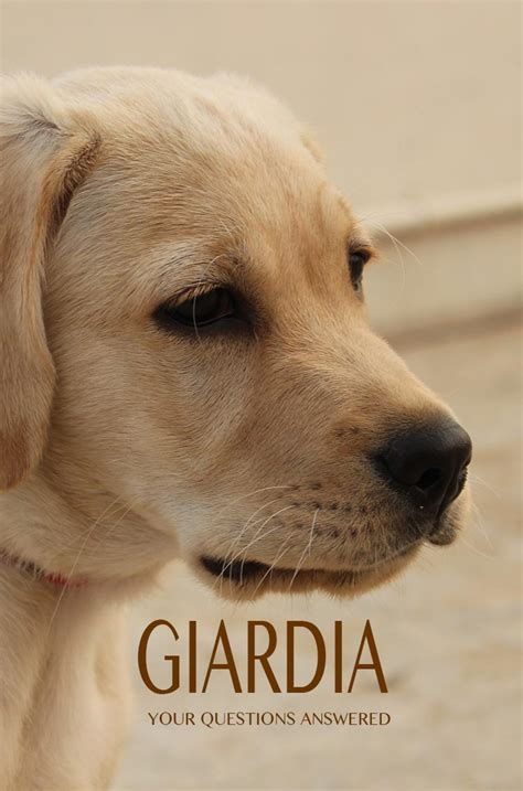 giardia in dogs treatment giardia in dogs