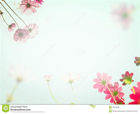 colorful flowers picture orange flowers in bloom light light colour flower background www pixshark images