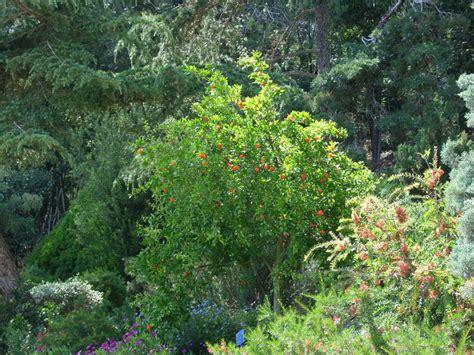 Garten Busch by Botanischer Garten Calella De Palafrugell
