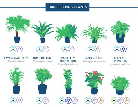 infographic top 18 houseplants for purifying the air you