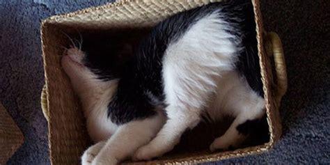 Keranjang Kucing Besar jangan berisik kucing kucing ini sedang tertidur