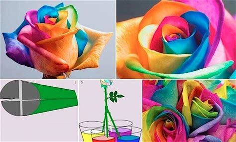 science craft for rainbow roses for s day science craft