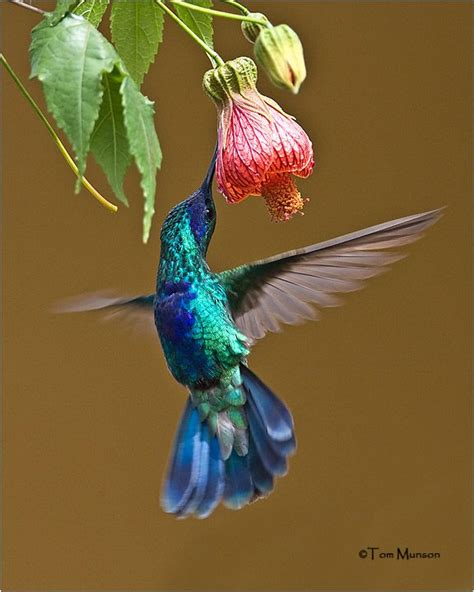 are hummingbirds color blind 28 images 8 things you