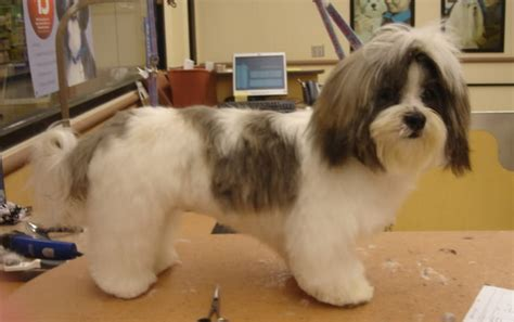 clippers for shih tzu best clippers for shih tzu hair