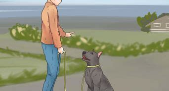 how to teach your puppy to walk on a leash how to walk a 12 steps with pictures wikihow