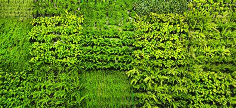 giardino verticale interno giardini verticali da interno e da esterno vendita