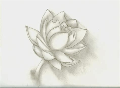 Sketches Flowers by Top 13 Flowers Sketches Beautiful Sketching Flowers