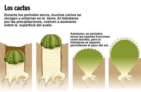 cual es la planta de washington 17 mejores im 225 genes sobre desierto calido en pinterest
