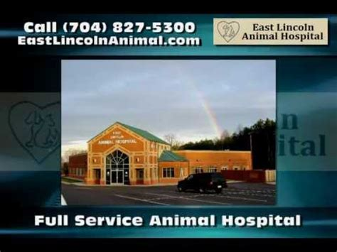 east lincoln animal hospital denver nc browse agriculture petcare on companytube