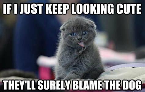 Adorable Meme - if i just keep looking cute theyll surely blame the dog
