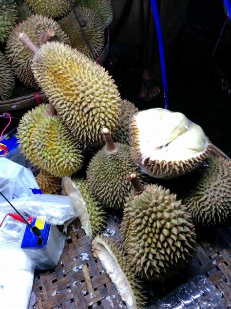 durian info durian seasons  durian production areas