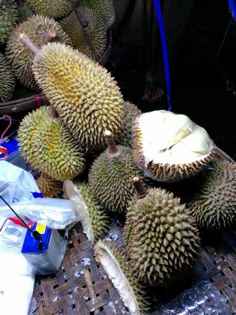durian info durian seasons  durian production areas