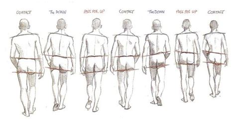 google design reference hips walk cycle google search animation pinterest