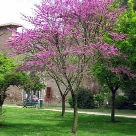 planter un arbre 224 racines nues ou en container au