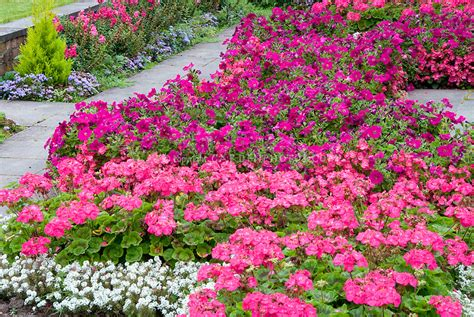 Garden Of Pink pink colors in the flower garden plant