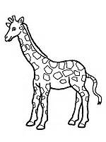 preschool coloring pages giraffe giraffe theme preschool lesson plan printable activities