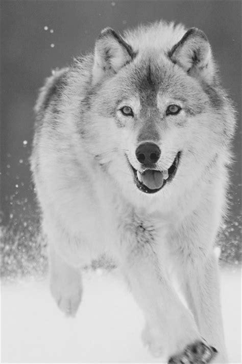 Cute Wolf Quotes. QuotesGram
