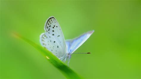 green butterfly wallpaper funny animal white butterfly on a green blade of grass wallpapers and