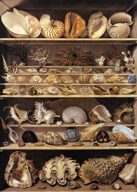 Cabinets De Curiosité by Cabinets Of Curiosity The Web As Wunderkammer The Appendix