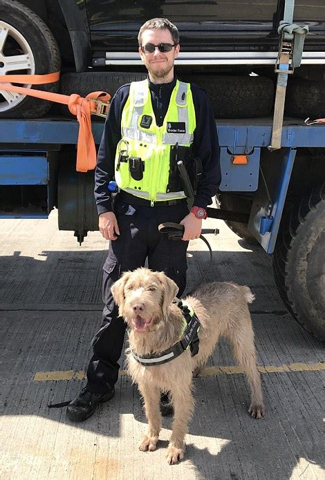 detector dogs tasked  sniffing  drugs  weapons
