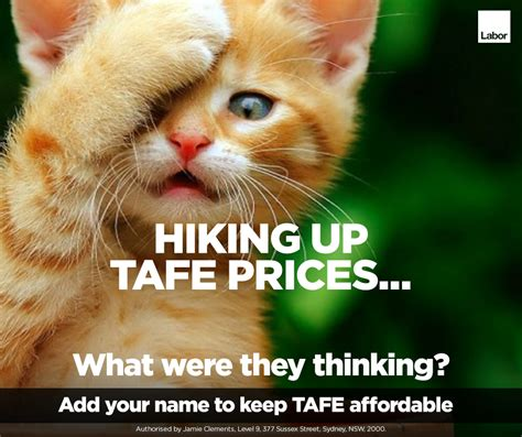 Tafe Memes - the alp is hoping cute cats will help it win the nsw