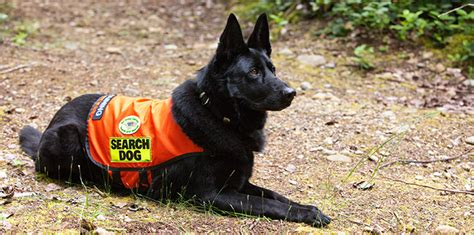 search dogs image gallery search dogs