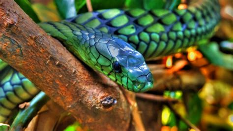 colorful snake colorful snakes related keywords colorful snakes