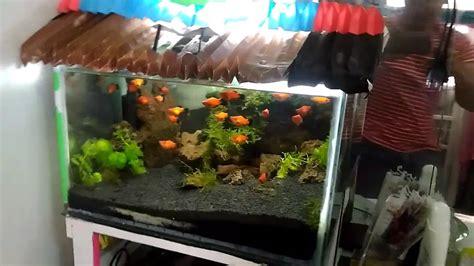 aquascape tanpa filter aquascape tanpa co2