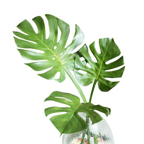 Philo Monstera green leaves 8pcs monstera ceriman leaves tropical split philo leaf plastic real touch outdoor