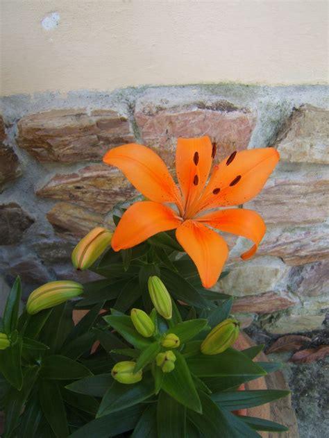 immagini di fiori e piante 19 fantastiche immagini su fiori piante e giardini su
