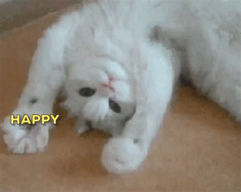 cat gif cat gif by happy birthday find on giphy