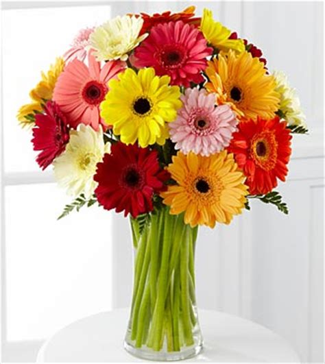 How To Arrange Gerbera Daisies In A Vase by Colorful World Gerbera Bouquet 18 Stems Vase