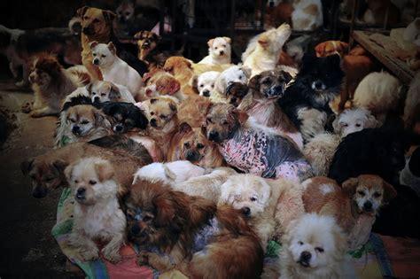 stopyulin woman saves  dogs   eaten