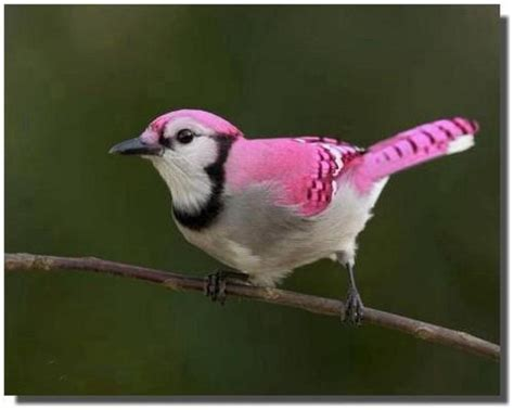 78 best images about pink birds on pinterest beautiful