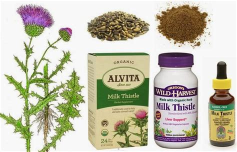 Safe Detox For Dogs by Ottawa Valley Whisperer Milk Thistle Herbs For