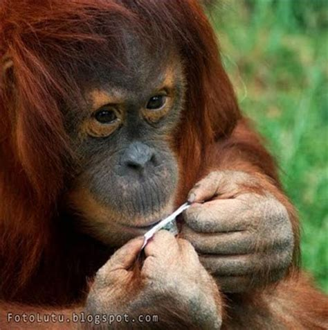film horor mama wikipedia indonesia october 2013 enjoy my blog ngentot memek abg perawan foto monyet yang lucu