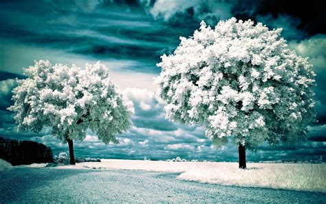 wallpaper desktop nature winter winter nature hd wallpapers