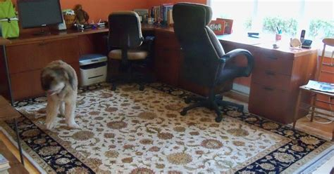 Office Area Rugs Brandon Rugs Home Office Rug Solution From
